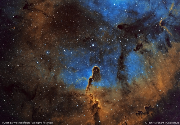 IC 1396 • Elephant Trunk Nebula
